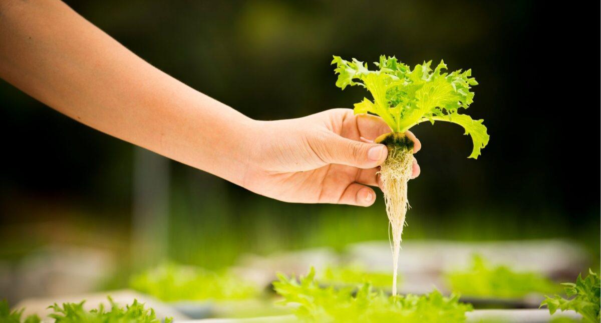 гидропоника удобрения verde верде
