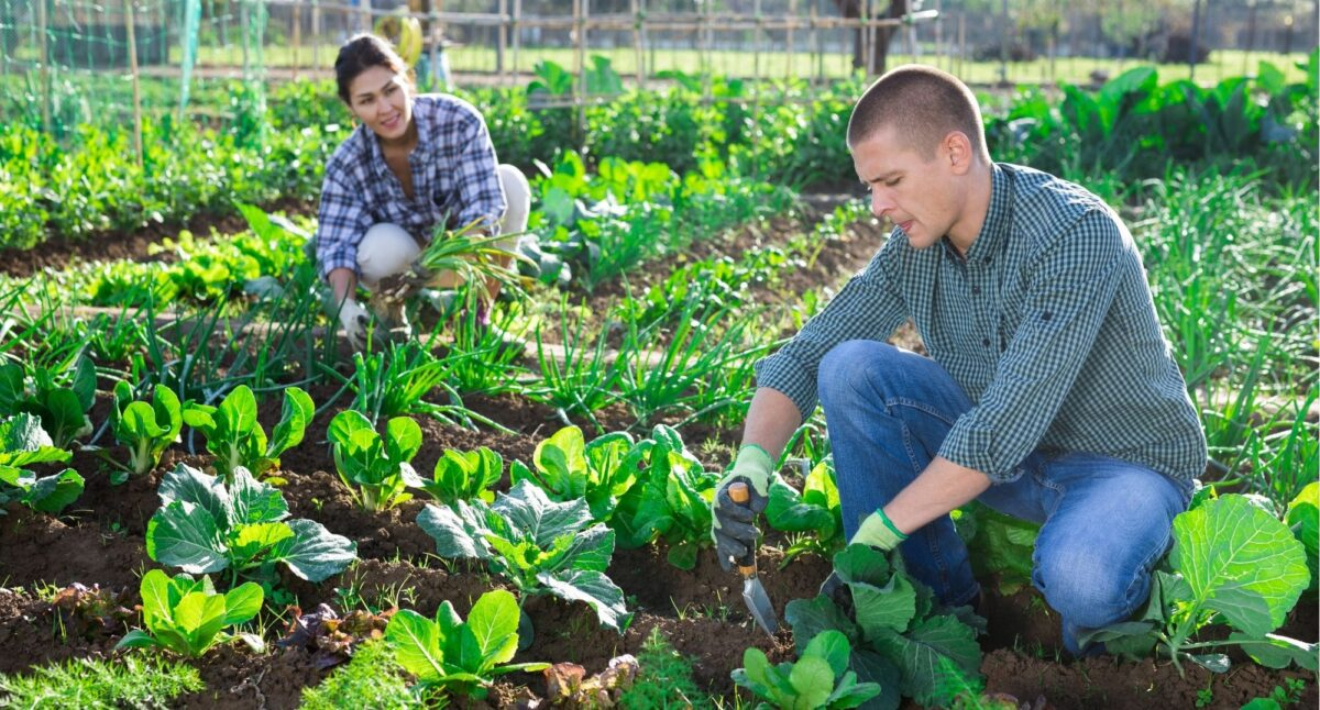 Родючість ґрунту. Як перевірити, чи достатньо в ньому необхідних макроелементів?